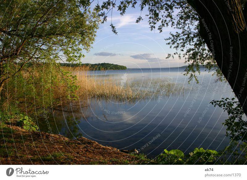 Blick auf den See Wasser blau Ferne See Perspektive Schilfrohr Gewässer