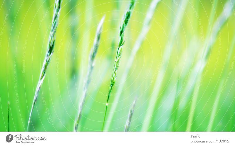 sanftes flüstern Natur schön Sonne grün Pflanze Sommer ruhig Ferne gelb Farbe Lampe Erholung Wiese Gefühle Gras Frühling