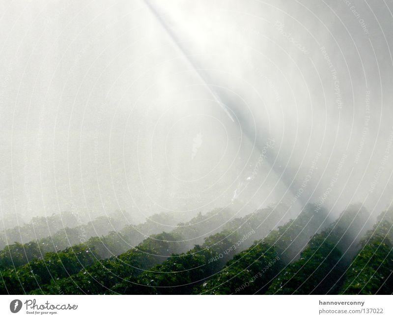 On the dry side of life... Wasserfontäne Bewässerung Nebel Feld Wasserstrahl Strahlung Schleier Nieselregen Wiese Landwirtschaft Ackerbau Gemüse spritzen
