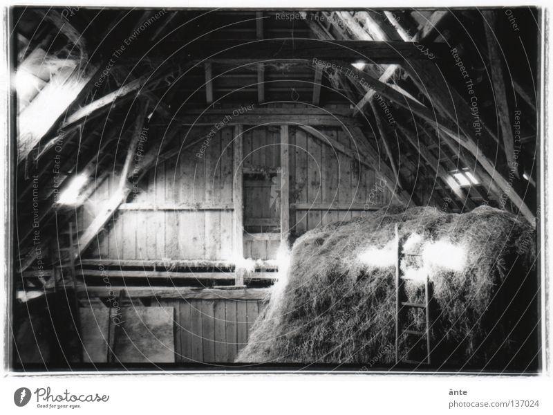 Anno 1748 Spinnennetz Bauernhof Licht Nostalgie Holz Dach Schweiz Futter Emmental historisch Heustock Leiter alt Holzbauweise Lichtschein Lichtstrahl gezimmert