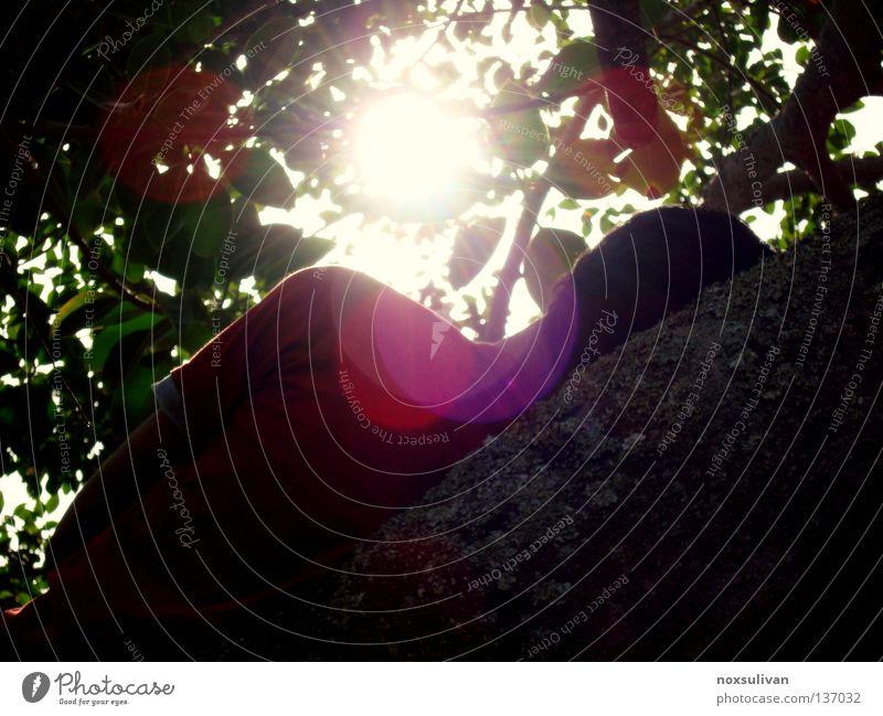 i am here Baum Sonne Freude Einsamkeit Denken hell Suche schlafen verstecken Linse Brennpunkt