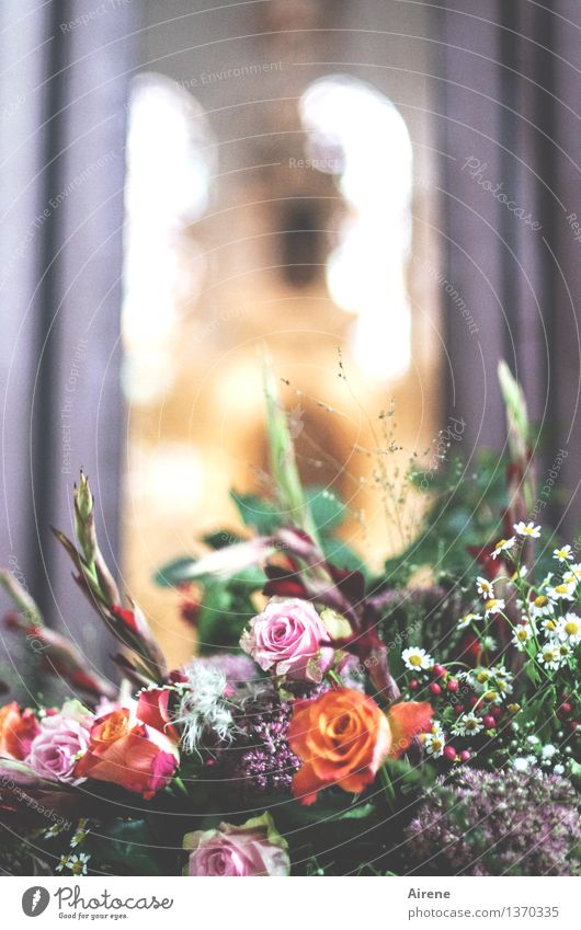Andacht Rose Blumenstrauß Blumenschmuck Kirche Kirchenfenster Religion & Glaube Kirchenraum Kirchenschiff Altar Duft orange rosa Liebe Romantik ästhetisch Tod