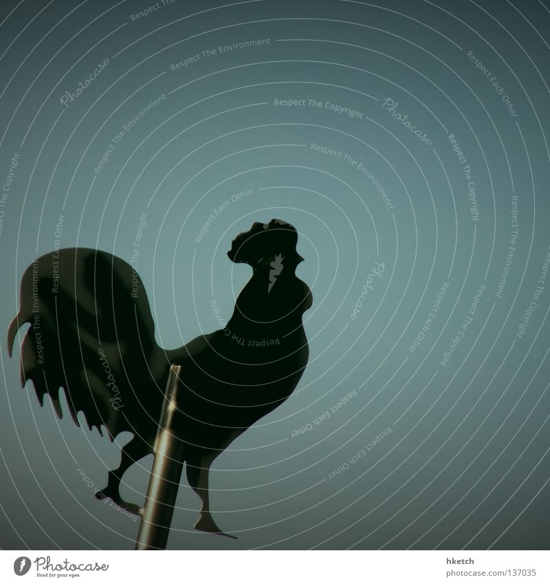 Da brat mir doch einer nen Storch... Himmel blau Sommer Freude Geburtstag Quadrat Hahn Jubiläum Wetterhahn