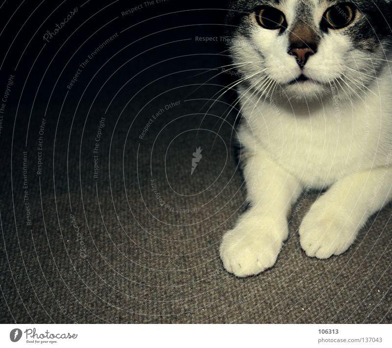 GOD BLESS YOU Katze Tier Wohnung Frieden Haustier tierisch Pfote Säugetier Hauskatze Teppich Erbe