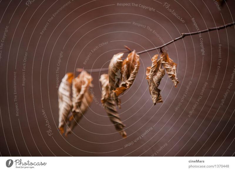 herbstliche Vergänglichkeit Umwelt Natur Pflanze Herbst Blatt Wald hängen verblüht dehydrieren alt trocken braun Vergangenheit Ast welk Gedeckte Farben