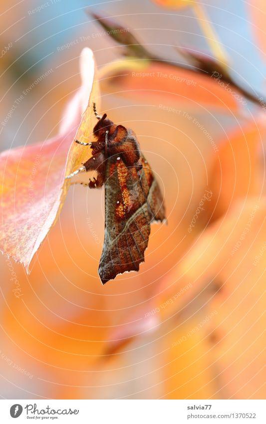 Ruhestellung Natur Pflanze blau Erholung Blatt ruhig Tier Wärme Herbst Stimmung orange leuchten Sträucher ästhetisch Flügel Schönes Wetter