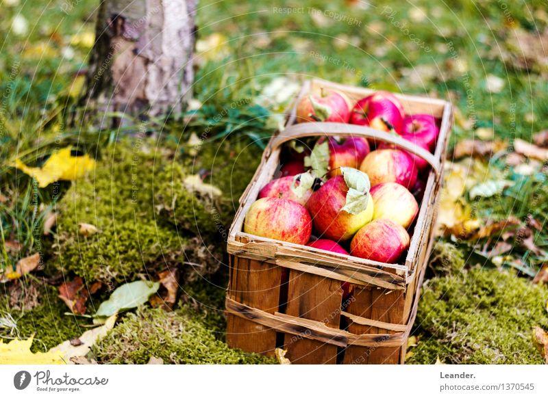 Äpfel I Natur Pflanze Sommer Wald Umwelt Herbst Wiese Essen Gras Glück Garten Frucht Dekoration & Verzierung frisch Idylle Idee