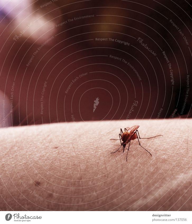 Prost Mensch Natur Sommer Tier Tod Ernährung Lebensmittel Garten Angst Arme sitzen Haut gefährlich bedrohlich trinken Insekt