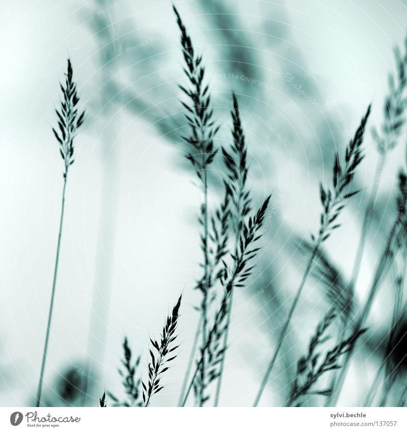an einem regentag II Himmel Wiese Gras Bewegung grau Traurigkeit Wind Wetter Trauer nah Ende Vergänglichkeit zart Stengel Halm Korn