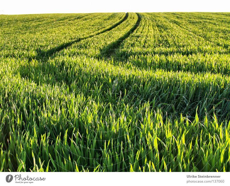 Westkurve Natur grün Ernährung Frühling Feld frisch Wachstum fahren Kornfeld Spuren natürlich Getreide Kurve Schönes Wetter Verschiedenheit