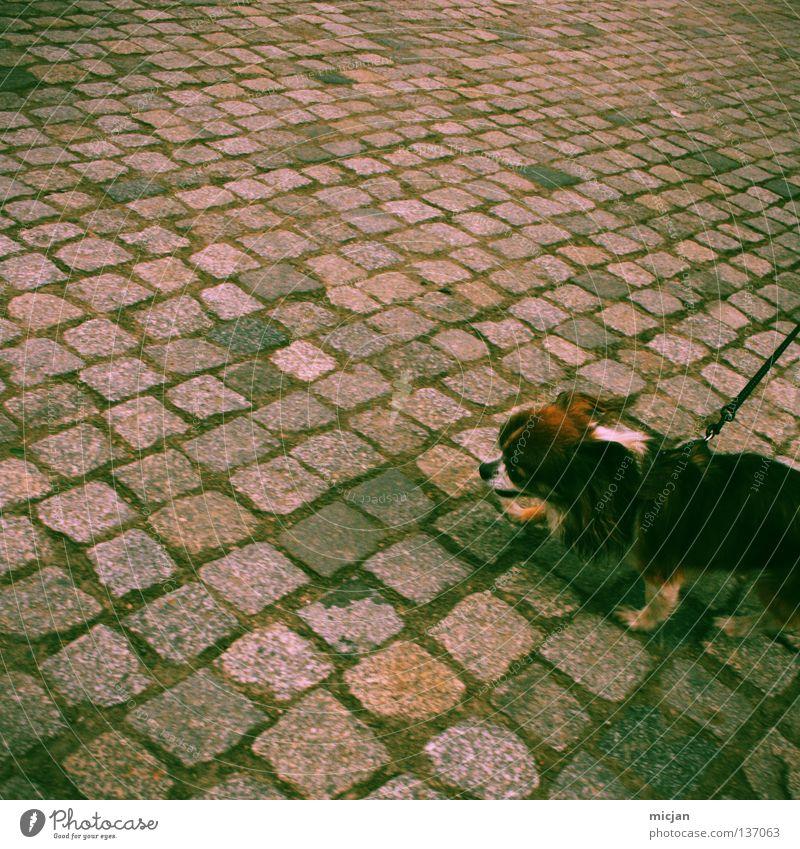 Holy Crap! It's Lomography! Hund grün Tier Straße klein gehen verrückt laufen Spitze niedlich Seil Spaziergang Fell Verkehrswege Kopfsteinpflaster Quadrat