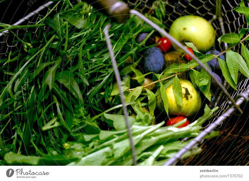 Spätlese Garten Schrebergarten Frucht Versorgung selbstversorgung Gesunde Ernährung Speise Essen Foodfotografie Ernte Erntedankfest Vegetarische Ernährung