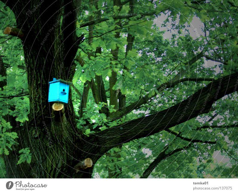 1.Zi.DG. Erstbezug nach Modernisierung! Baum Haus Renoviert Futterhäuschen Vogelkolonie Nest Nestbau Dachgeschoss Wohnung Raum Amsel Drossel Fink Hotel grün