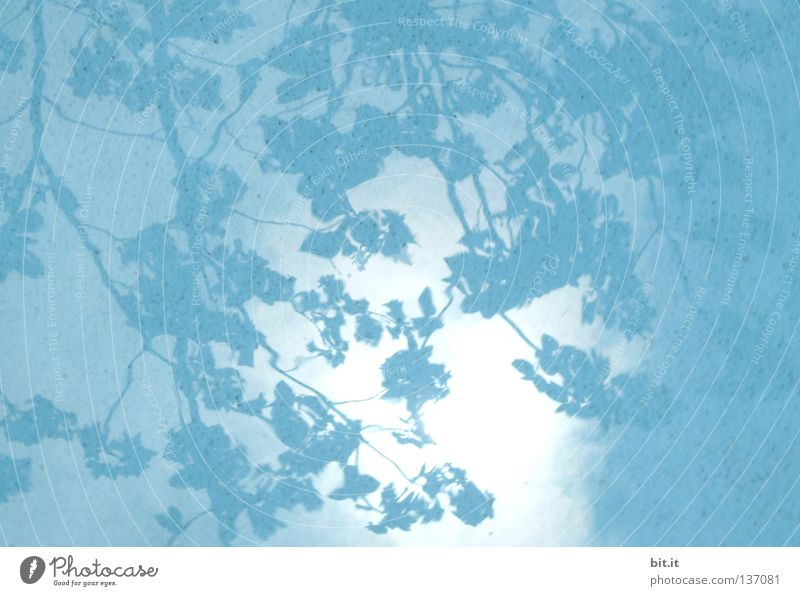 HIMMEL ÜBER JAPAN Himmel Baum Blatt Stoff hell Kitsch blau azurblau türkis Hintergrundbild Vorhang Ast Schattenspiel Wasser Stoffmuster Farbfoto Detailaufnahme