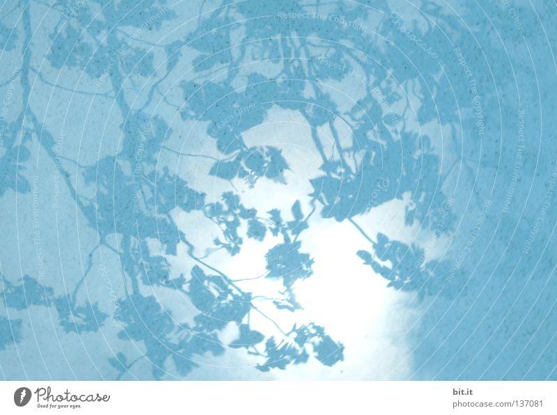 HIMMEL ÜBER JAPAN Himmel Wasser blau Baum Blatt hell Hintergrundbild Stoff Kitsch Ast türkis Vorhang Muster Schattenspiel azurblau