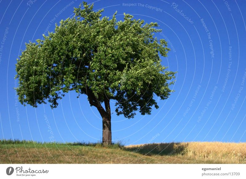 Baum (Sommerversion) Feld Wiese Blatt grün Himmel Schönwetter