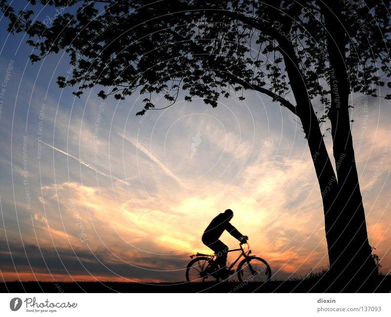 the long way home Mensch Mann Ferien & Urlaub & Reisen Baum Sonne Freude Blatt Erholung Umwelt Spielen Bewegung Kraft Fahrrad Klima Freizeit & Hobby Romantik