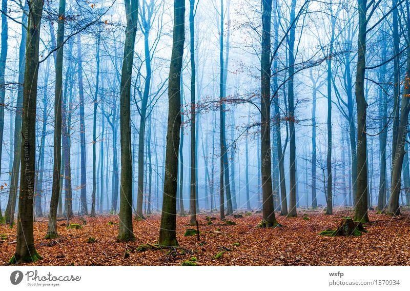 Zauber Wald im nebel in blau und orange Frühling Herbst Nebel Baum Blatt träumen Surrealismus fantasie Märchenwald Zauberwald mystisch verfärbt bezaubernd