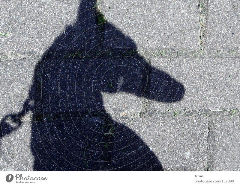 Peilung auf O Hund Licht Nervosität Halsband Wachsamkeit hören Geruch Konzentration zielen Säugetier Kommunizieren Schatten Seil Gehwegsteine Pflasterung Ohr