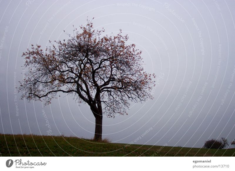 Baum (Herbstversion) Baum dunkel Herbst Ast schlechtes Wetter