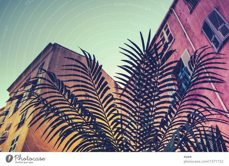 Hausgarten Himmel Ferien & Urlaub & Reisen Stadt alt Pflanze Sommer Fenster Reisefotografie gelb außergewöhnlich Fassade rosa Häusliches Leben einzigartig