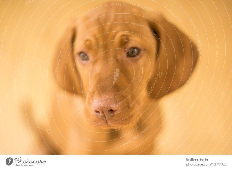 Unsichtbar Hund Tier Tierjunges klein Denken braun Freundschaft lernen beobachten niedlich entdecken Haustier Treue achtsam unschuldig Tierliebe
