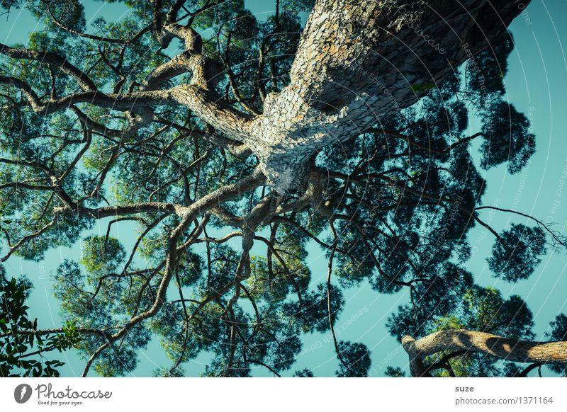Der Himmel hängt im Baum Leben Zufriedenheit Erholung ruhig Meditation Umwelt Natur Pflanze Luft Klima Wildpflanze exotisch gigantisch groß hoch einzigartig