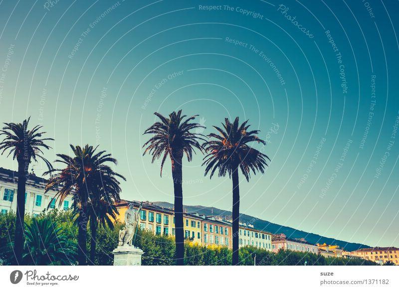 Palmen auf Calvi Ferien & Urlaub & Reisen Sommer Stadt Haus Architektur Lifestyle Stil ästhetisch einzigartig historisch Frankreich Sommerurlaub mediterran