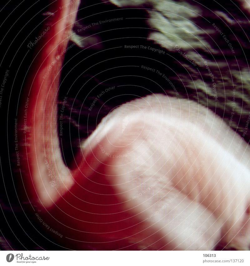 [PRGB.01] 2202 Natur rot Tier Farbe Wellen gehen rosa Rücken laufen Feder rund Trauer lang machen Dynamik Verzweiflung