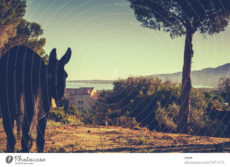 Der guckt nur, der will nicht spielen. Natur Ferien & Urlaub & Reisen Pflanze Sommer Baum Meer Landschaft Tier Haus Küste Freiheit Stimmung Zufriedenheit Erde wandern Sträucher