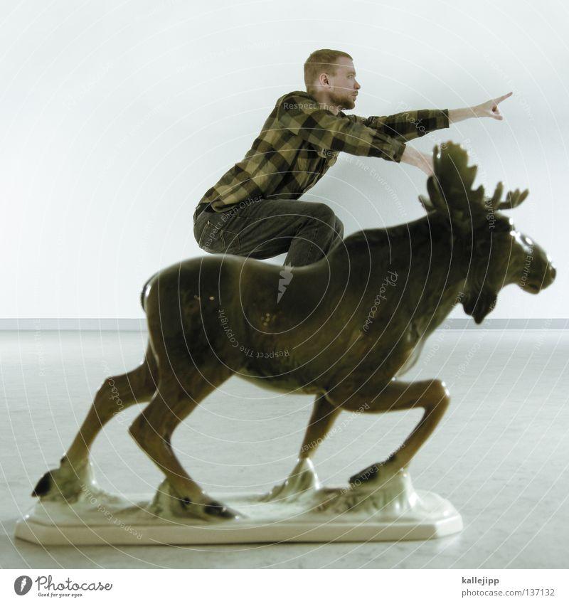 elchtest Elch Reitsport Springreiten Sturm Angriff Richtung zielen zielstrebig Krieger Reiterstandbild Tier niedlich Trophäe Erfolg Horn Kanada Amerika