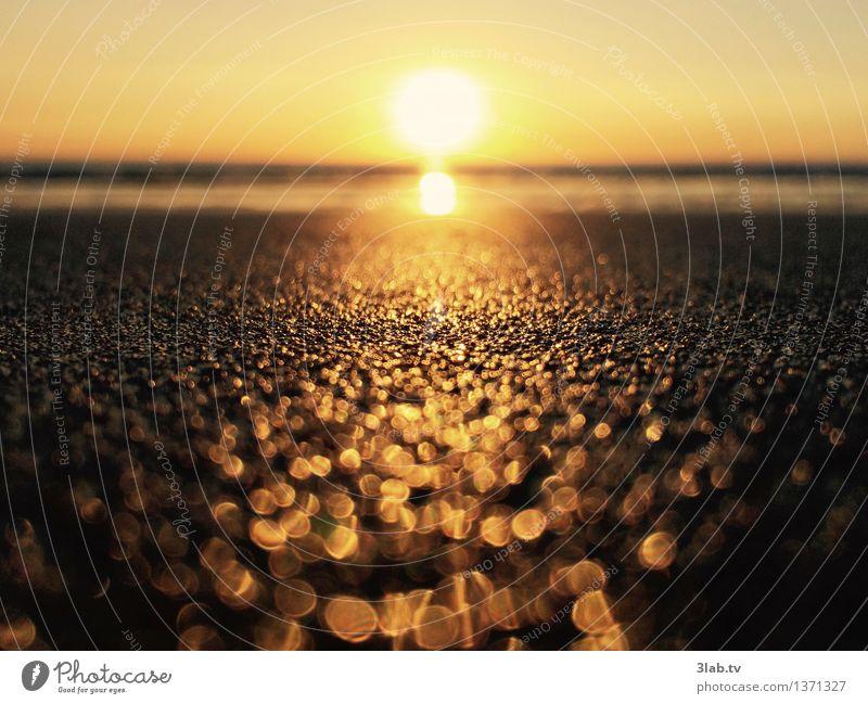 Sylt - ist nicht alles Gold, was glänzt elegant Glück Wohlgefühl Erholung Natur Landschaft Sand Horizont Sonnenaufgang Sonnenuntergang Sommer Wetter