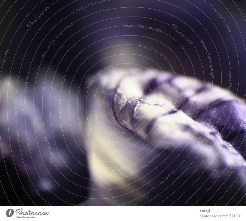 li*la li*cht Natur Pflanze Blume frisch weich nah violett zart Duft leicht Kurve Schweben Tiefenschärfe beweglich fein welk