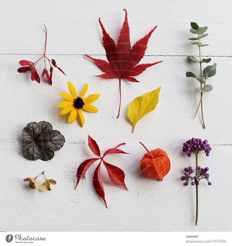 Herbst im Garten Natur Pflanze grün Blume rot Blatt gelb Blüte Gefühle Gras Stimmung orange Sträucher violett herbstlich