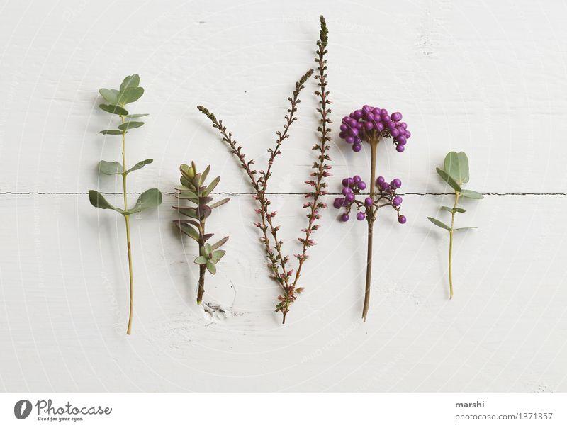 Garten-Stillleben Natur Pflanze Herbst Blume Gras Sträucher Grünpflanze Nutzpflanze Wildpflanze Stimmung Super Stillleben Eukalyptusblüte liebesperlenstrauch