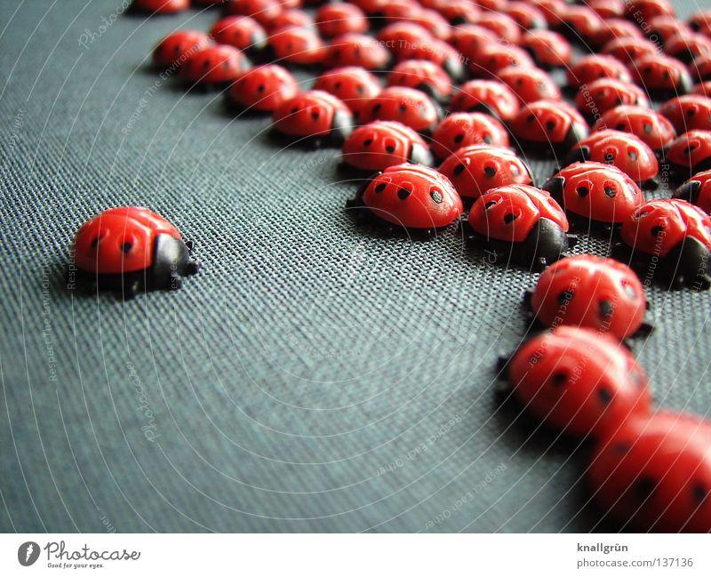 Sie kommen! Marienkäfer Insekt rot schwarz grau Tier Haufen Anhäufung Versammlung Glücksbringer Makroaufnahme Nahaufnahme obskur Käfer Punkt mehrere Statue