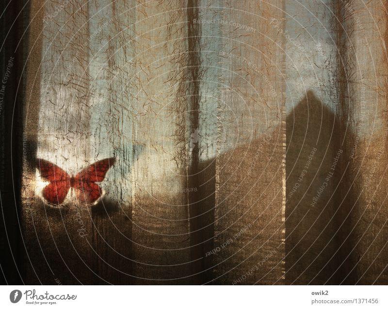 Stille Fenster Dachgiebel Unschärfe schemenhaft Etikett Schmetterling Kunststoff Gardine leuchten Stimmung Gelassenheit ruhig Zufriedenheit durchscheinend
