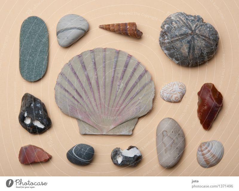 Lieblingsfundstücke - Super Stilllife harmonisch Wohlgefühl Sinnesorgane Ferien & Urlaub & Reisen Tourismus Ausflug Sommer Strand Meer Sammlung Sammlerstück
