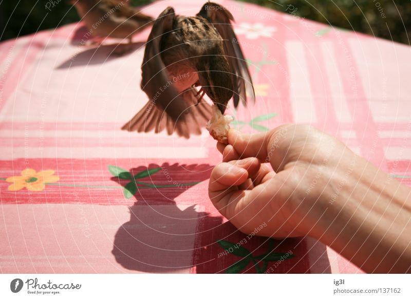 SPATZEN ANGELN Ferien & Urlaub & Reisen Tier Vogel fliegen Kraft Arme Energiewirtschaft Armut Ernährung Spaziergang Flügel Lebewesen festhalten Wunsch Gastronomie Müll