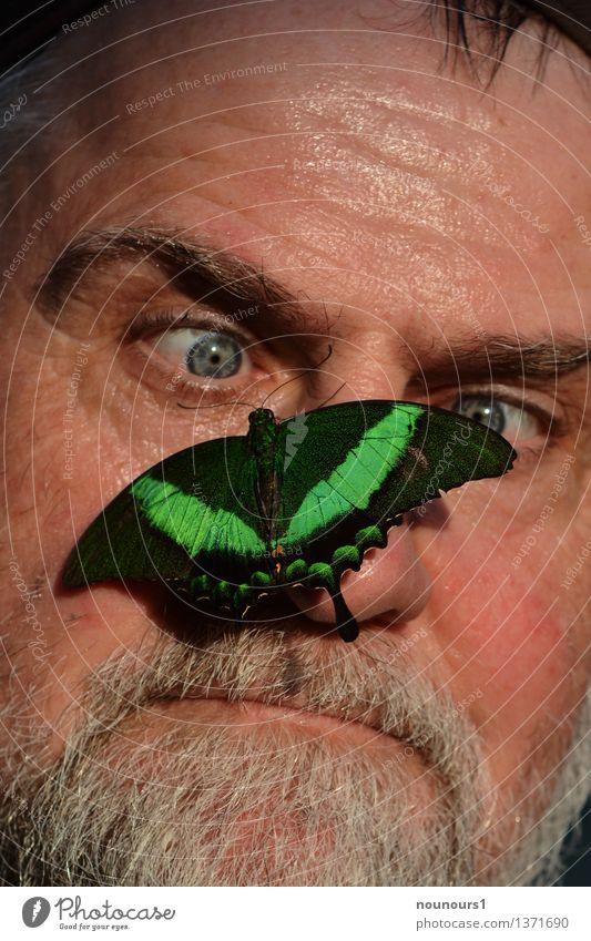 cool bleiben Mensch maskulin Mann Erwachsene Haut Kopf Haare & Frisuren Gesicht Auge Nase Mund Lippen Bart 1 45-60 Jahre Tier Wildtier Schmetterling atmen