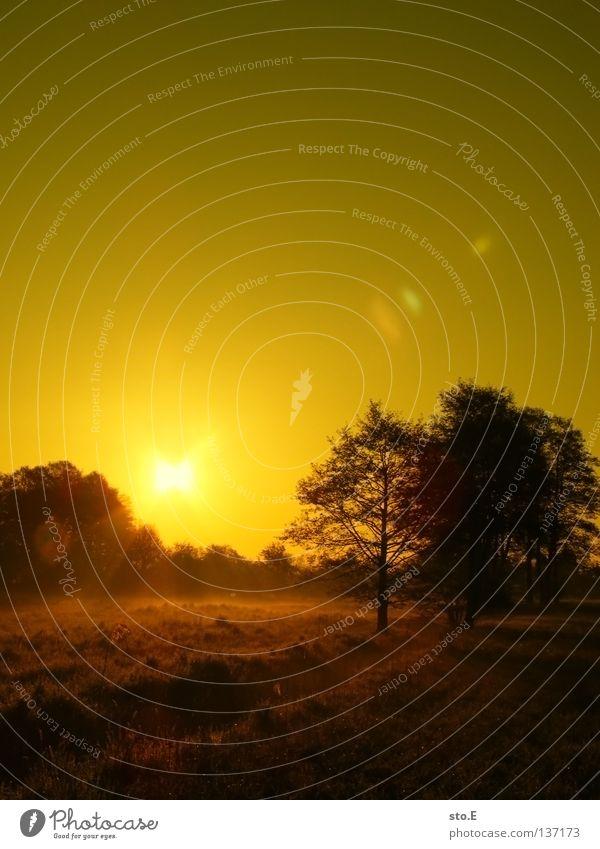 early morning | fließ pt.2 Stimmung Körperhaltung Lampe Wiese Feld Ferne Sonnenaufgang Morgen Baum Baumkrone Blatt Horizont Silhouette schwarz Schatten