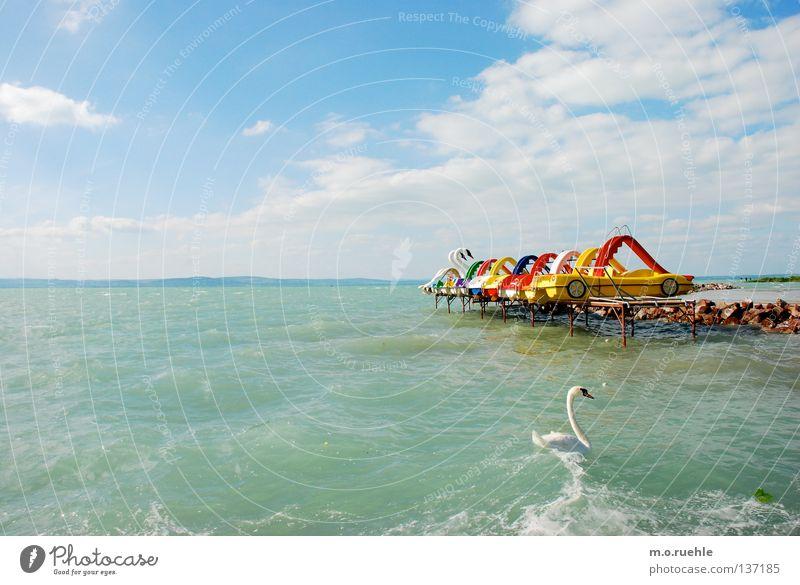 konkurrenz Sommer Farbe Spielen See Vogel Schwan Ungarn Plattensee