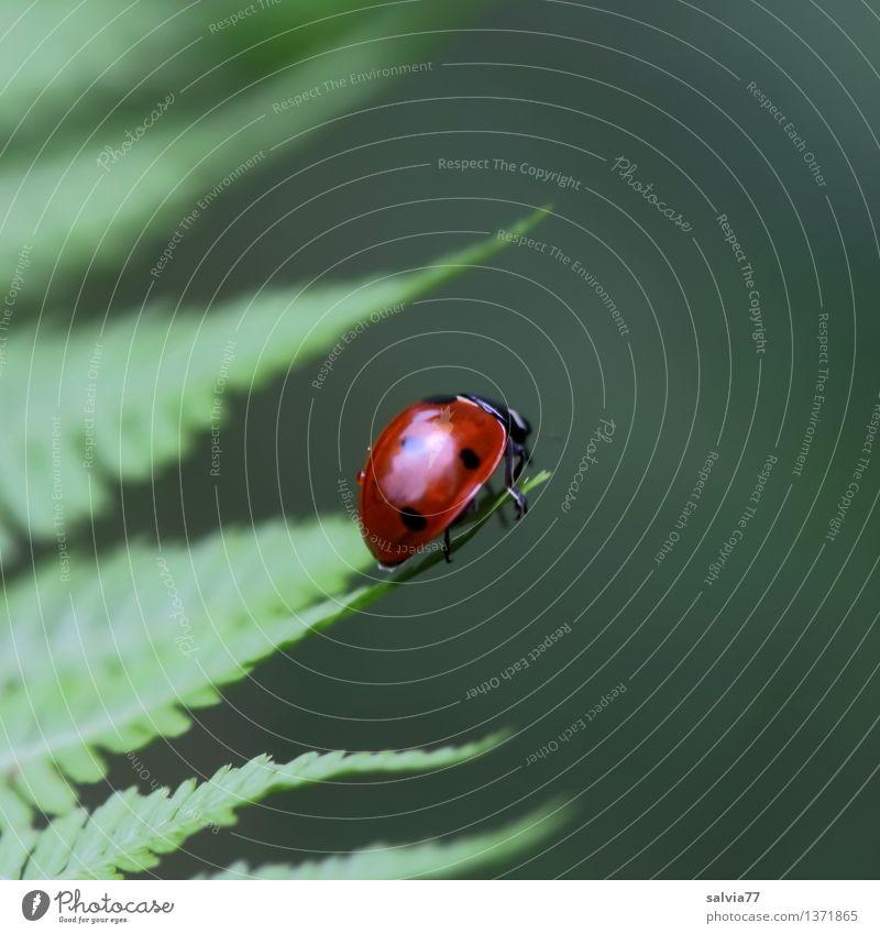 Mittelpunkt Natur Pflanze grün Sommer rot Blatt ruhig Tier Umwelt Glück klein Stimmung oben glänzend frisch niedlich