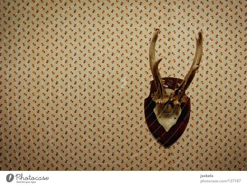 Hans alt Blume braun Wildtier Jagd Tapete Horn Museum Stolz Hirsche Schwäche Jäger Reh unschuldig schießen Trophäe
