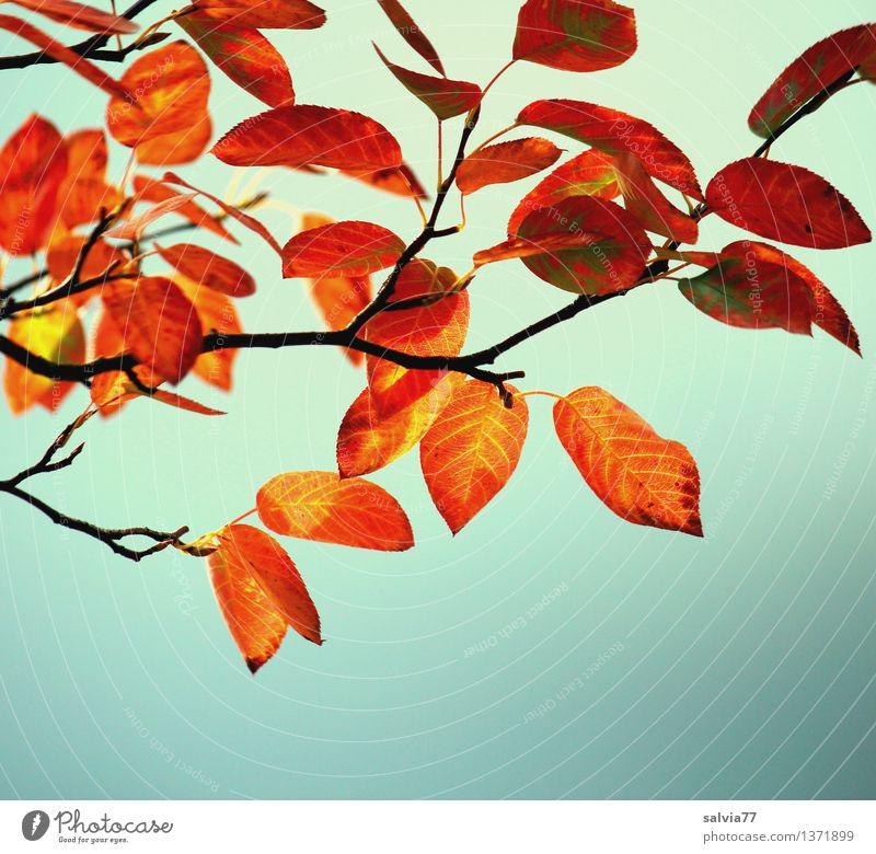 Herbstfärbung Himmel Natur Pflanze Baum Blatt ruhig Wald gelb Wärme braun Stimmung oben hell Park orange