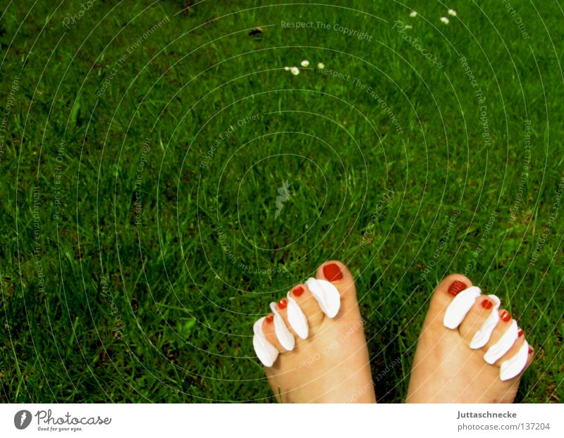 Aufbrezeln grün schön rot Sommer Wiese Gras Garten Fuß Kosmetik Rasen Barfuß Zehen Nagel Körperpflege Nagellack Watte