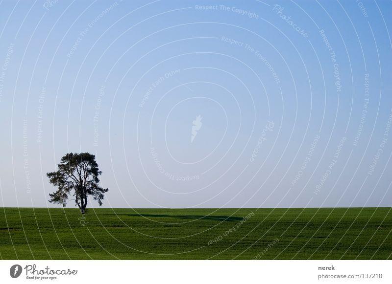 mein liebster baum Natur alt Baum grün blau Einsamkeit Ferne Feld Horizont nah Unendlichkeit Landwirtschaft Amerika Bioprodukte Steppe interessant