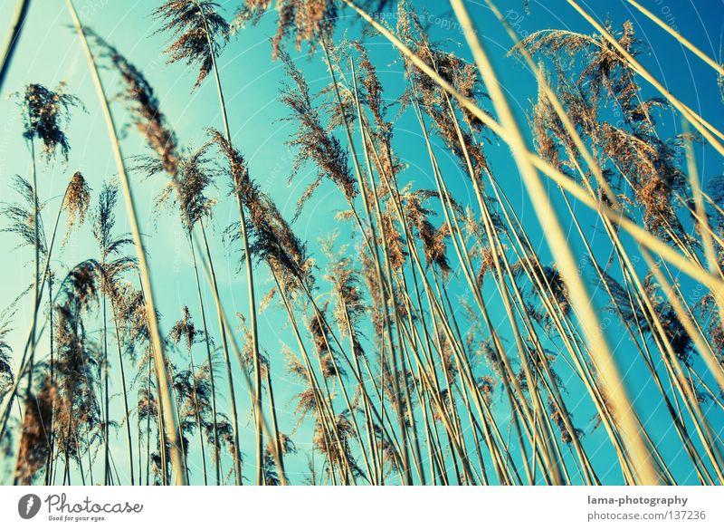 summertime Palme Palmenwedel Schilfrohr Gras Wind zart klein leicht See Biotop Frühling Binsen Halm Grasland Pflanze Wiese Gegenlicht blenden Strahlung