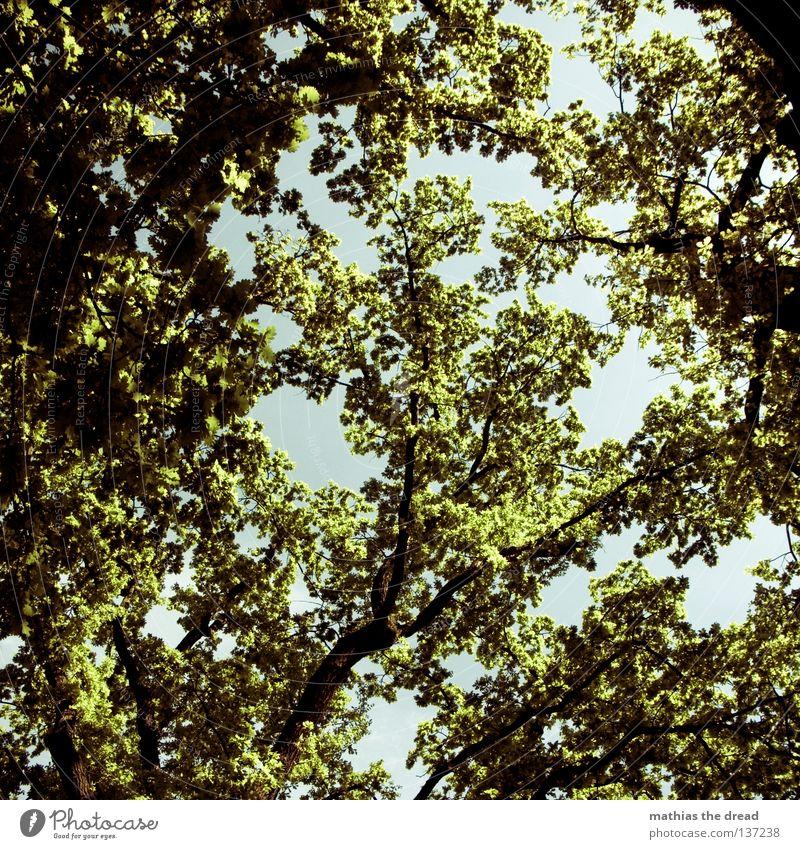 LEBENSBAUM Natur schön Himmel Baum grün Pflanze Sommer Blatt Tier gelb Wald dunkel Erholung springen Frühling Park