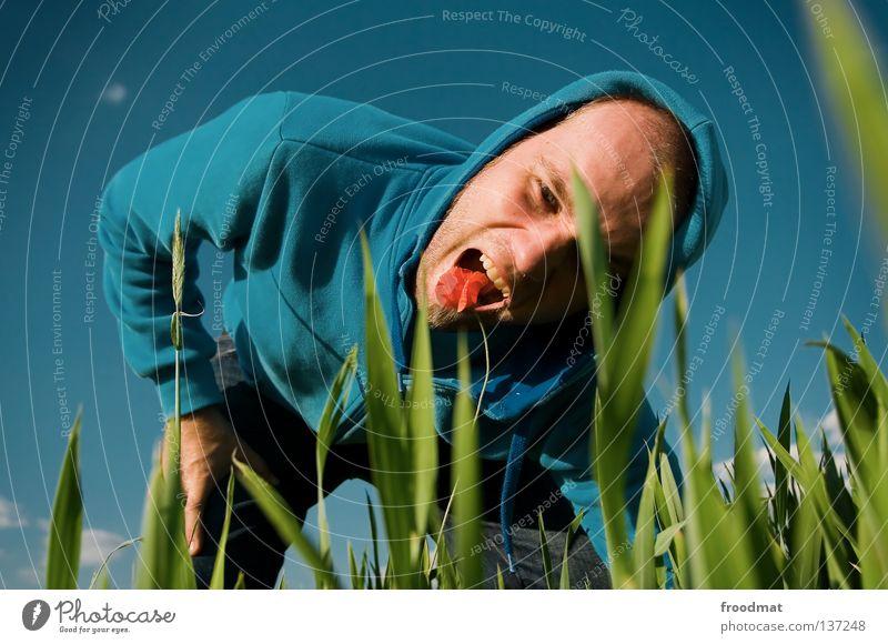 pflanzenfresser Vegetarische Ernährung Blume Feld grün rot Hongkong Kapuze Gras Wiese Mohn Rauschmittel Pflanzenfresser Jacke Proviant lecker Frühling Sommer